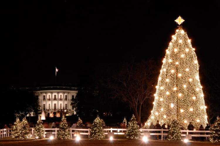 the national christmas tree lit at night, with the white house in the background