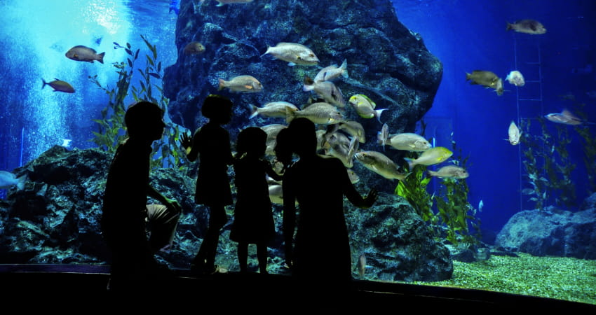 a family observes a large tank of exotic fish