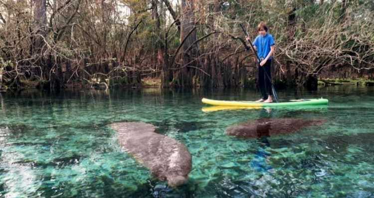 Child paddleboarding with manatees