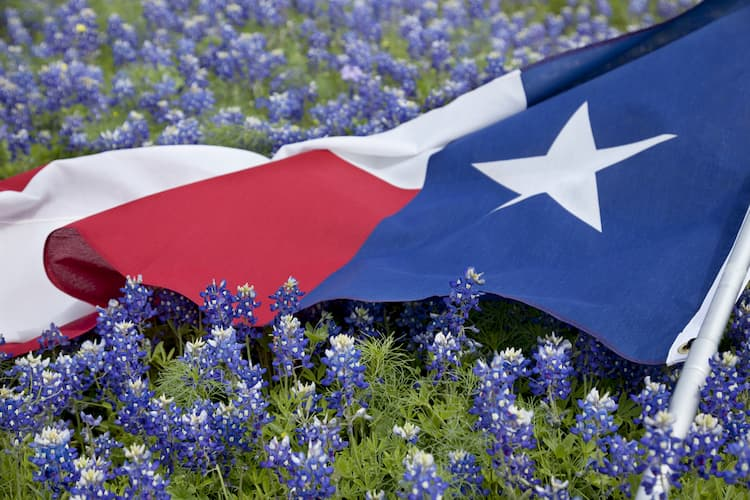 Texas flag in a field of blue bell flowers.