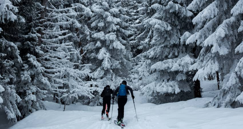 two backcountry skiers trek into a forest heavy with snow