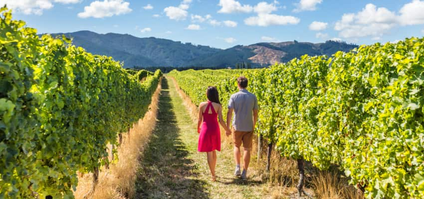 a couple hold hands as they walk through a Napa Valley vineyard