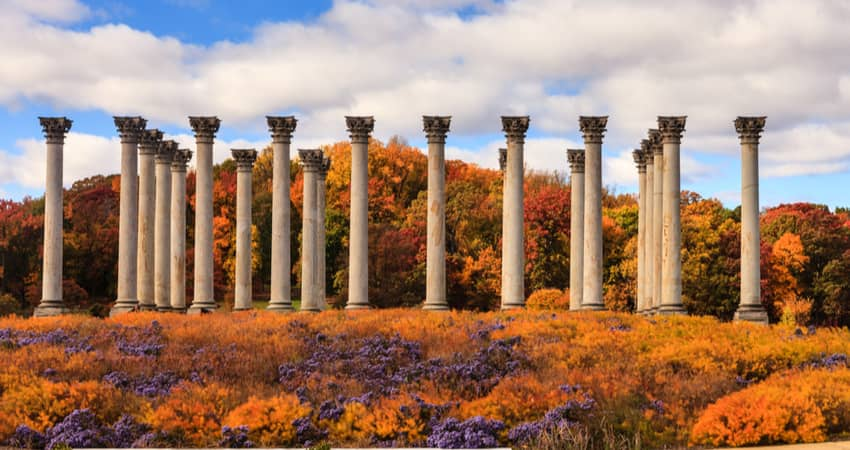 The Captiol Columns surrounded by fall foliage at the US Arboretum.