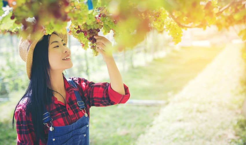 A woman in overalls inspects a grape vine at a vineyard