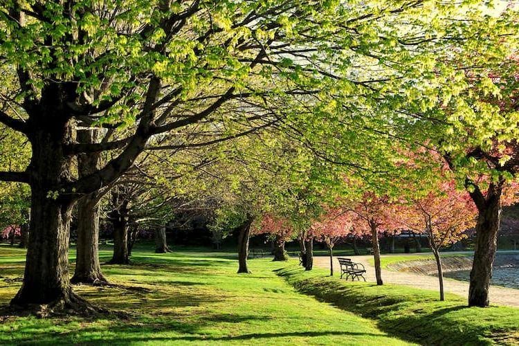 Trees in Arnold Arboretum