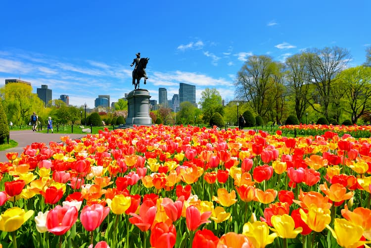 Red and yellow tulips in Boston Public Garden