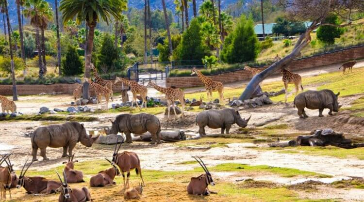 animals at the San Diego Zoo Safari Park in Escondido