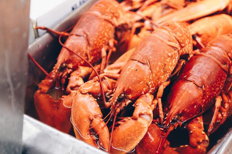 charter-bus-rental-maine-lobster-festival