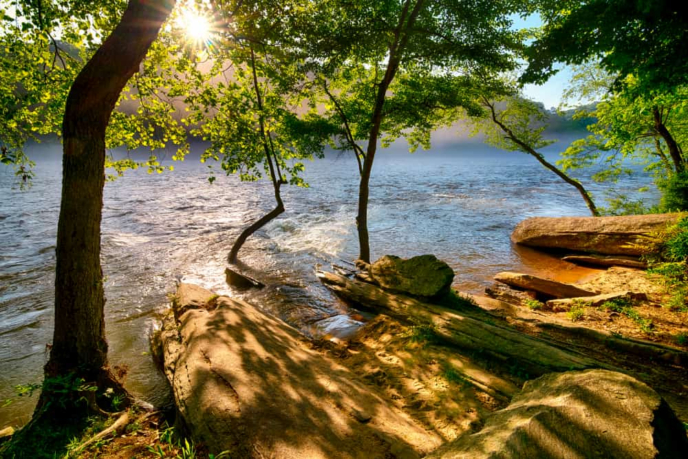 the sun shines through the trees on the peaceful banks of the chattahoochee river
