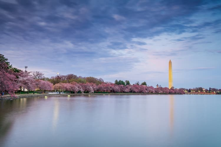 a view of the washington monument from across the tidal basin, lined with cherry blossom trees