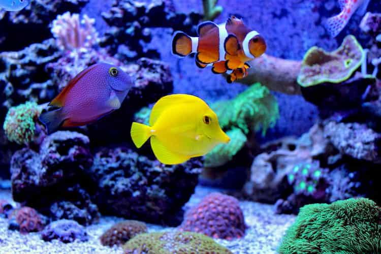 saltwater fish wander their tank at the shedd aquarium in chicago