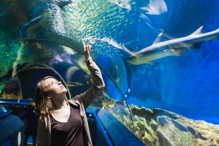 a woman observes sharks and other fish in a tunnel at the shedd aquarium in chicago