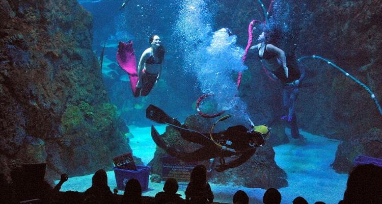 mermaids diving at the downtown aquarium in denver