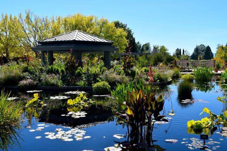 japanese garden pond at the denver botanic gardens