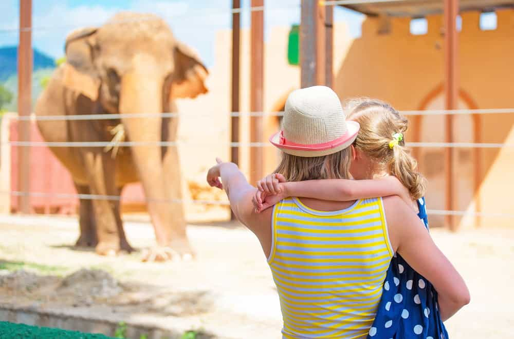 A woman and child looking at elephants at a zoo