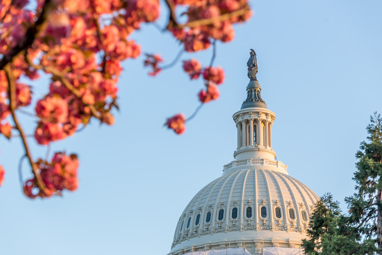 An exterior view of the us capitol rotunda with fall leaves in the foreground