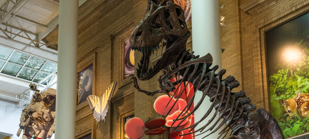 the denver museum of nature and science interior, featuring a T-Rex fossil