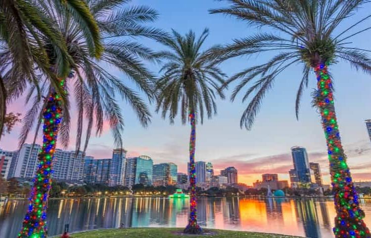 Palm trees decorated for the holidays at Lake Eola