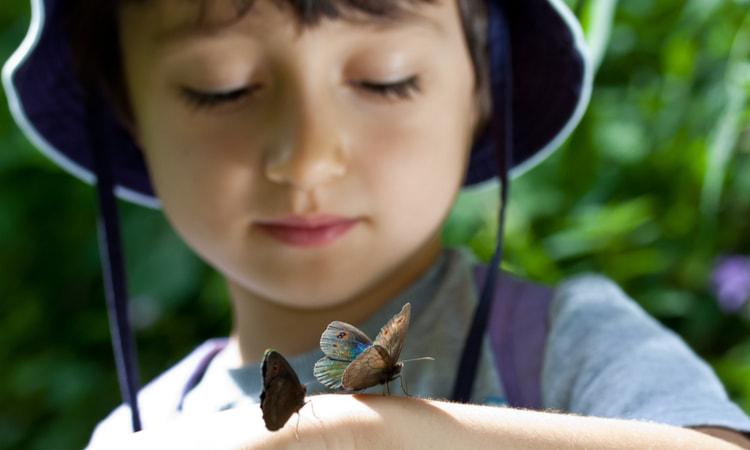 up close image of child with two butterflies on his hand