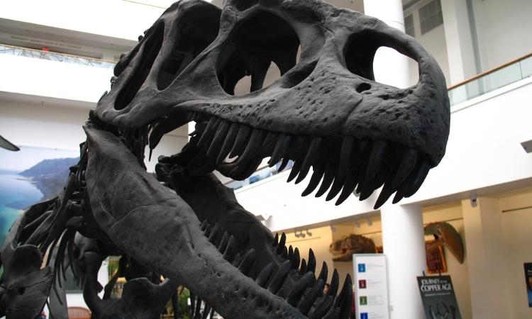 allosaurus at the san diego natural history museum