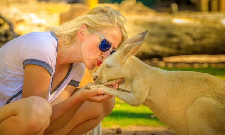 Woman kissing a kangaroo on the head at the zoo