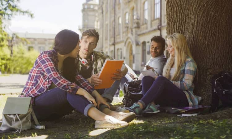 Four students studying under a tree