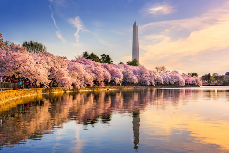 Washington DC, USA at the tidal basin with Washington Monument in spring season